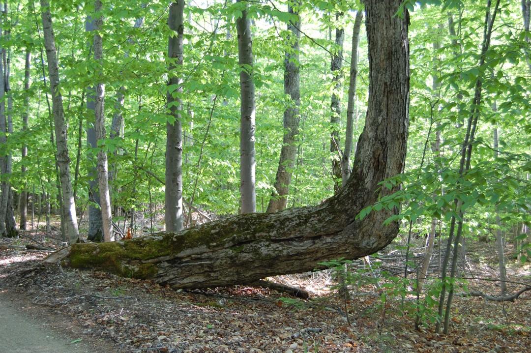 arbre-balise-sentier-maruqe-amerindien-05