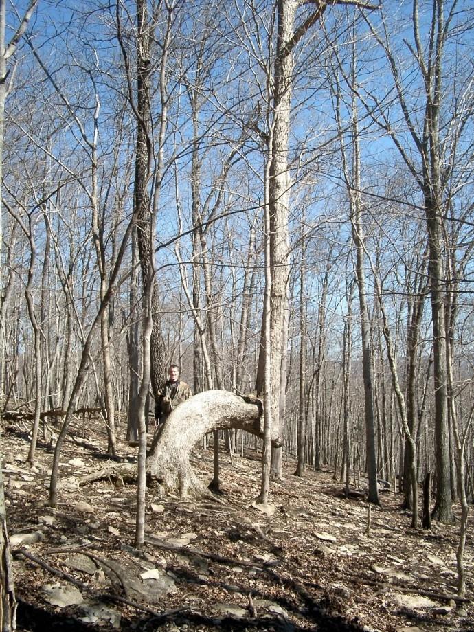 arbre-balise-sentier-maruqe-amerindien-06