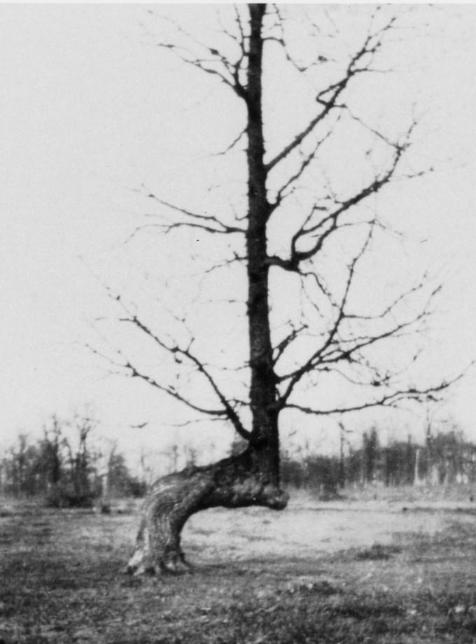 arbre-balise-sentier-maruqe-amerindien-07