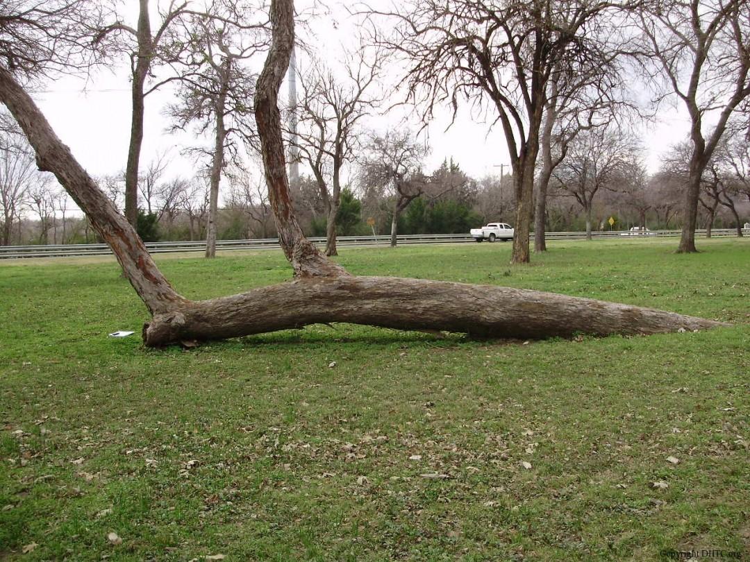 arbre-balise-sentier-maruqe-amerindien-08