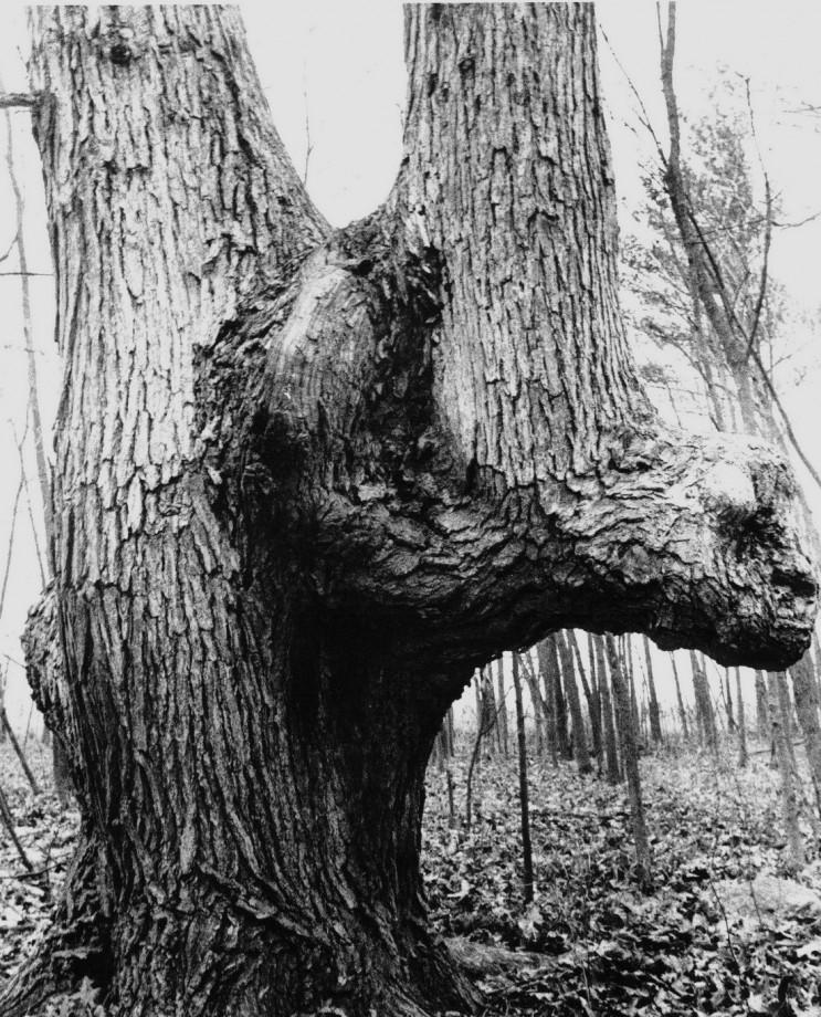 arbre-balise-sentier-maruqe-amerindien-09
