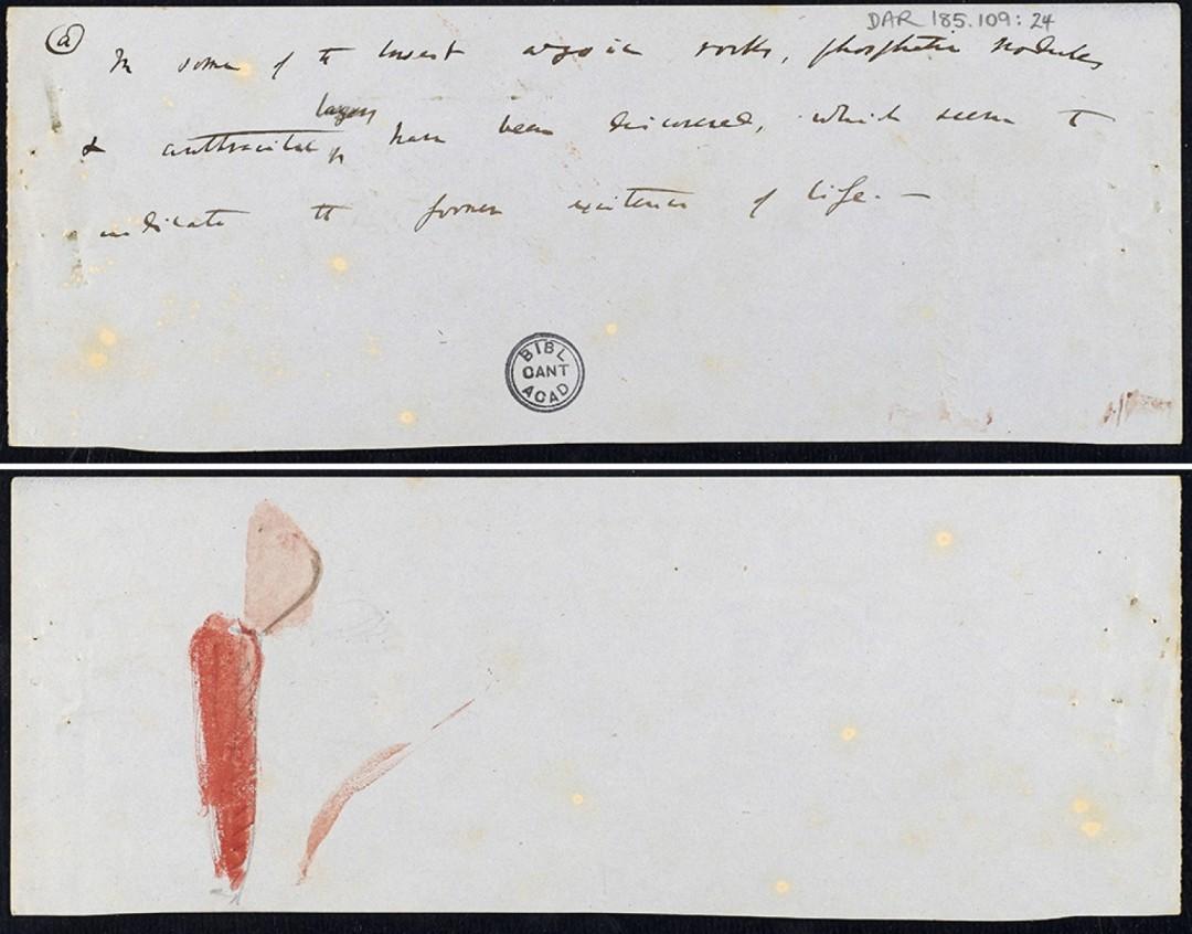 enfant-dessin-darwin-manuscrit-origine-espece-07