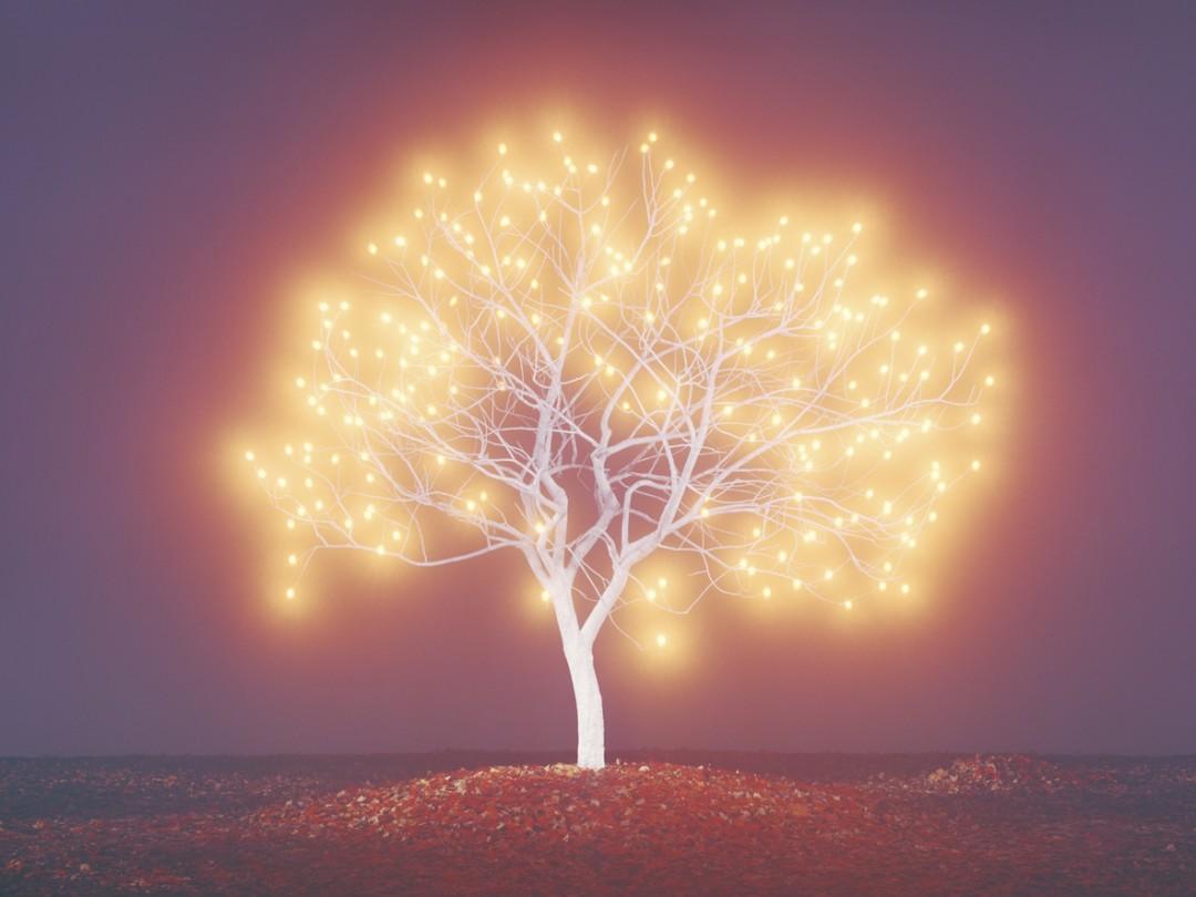 Lee-Jeong-Lok-arbre-lumiere-06