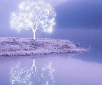 Lee-Jeong-Lok-arbre-lumiere-10
