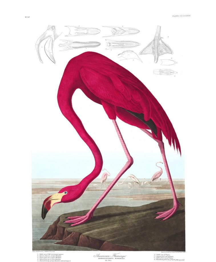 audubon-oiseau-amerique-01