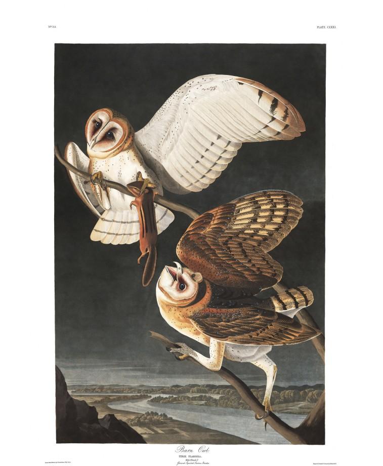 audubon-oiseau-amerique-13