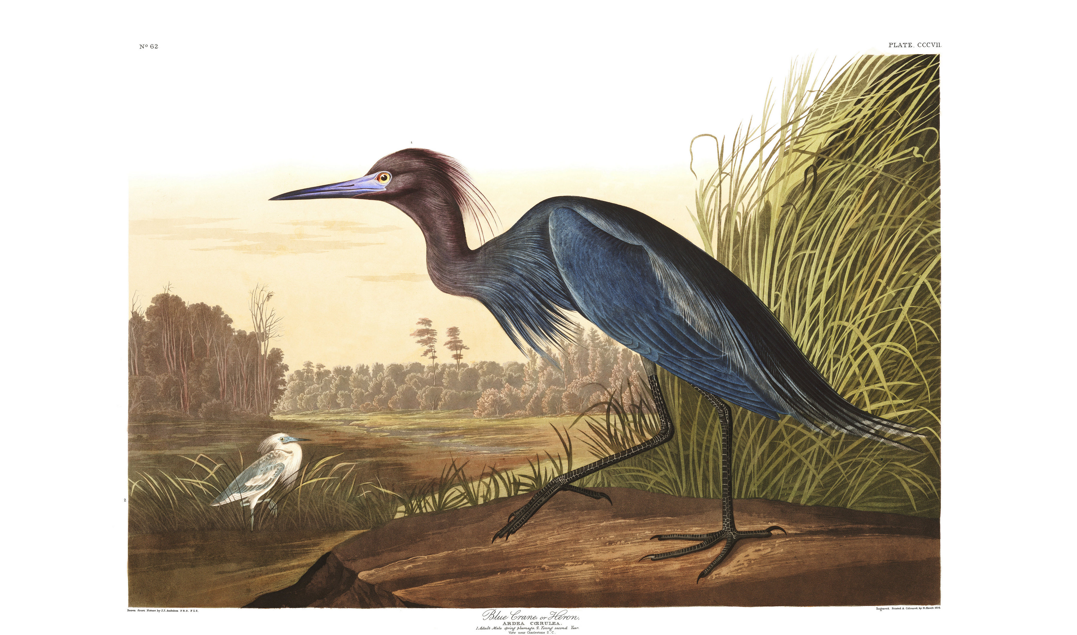 Audubon oiseau amerique 14 la boite verte - Ciment romain composition ...