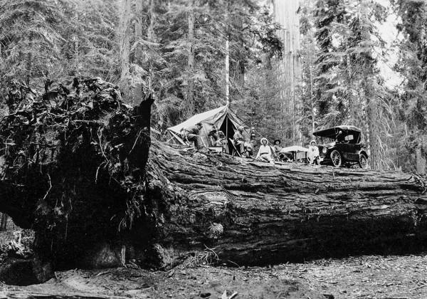 camping-arbre-foret-sequoia