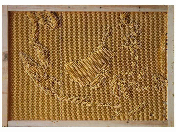 carte-abeille-cire-ruche-03