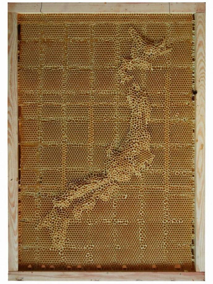 carte-abeille-cire-ruche-04