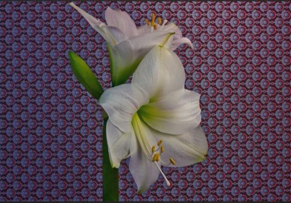 Des fleurs en éclosion rapide