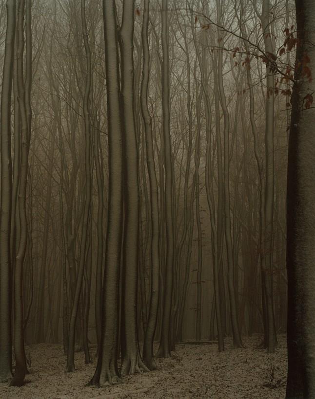 jasmund-rugen-01