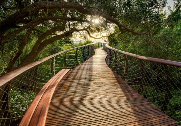 promenade-arbre-01