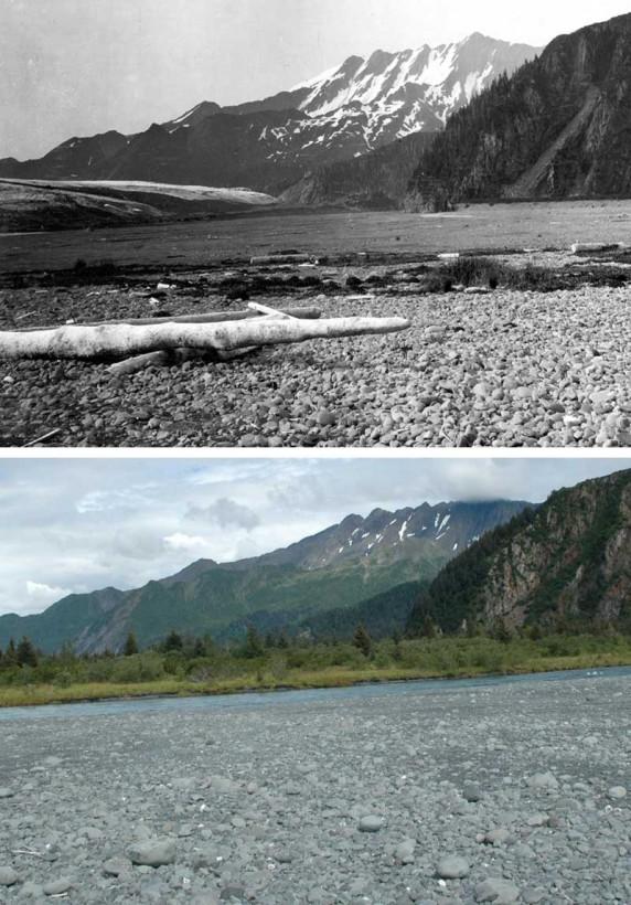 04-bear01-recul-glacier-alaska
