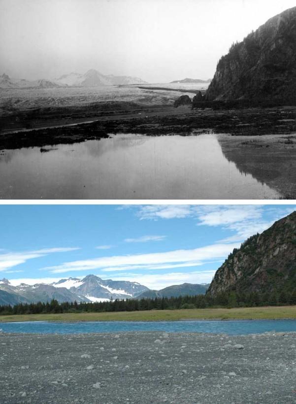 05-bear03-recul-glacier-alaska