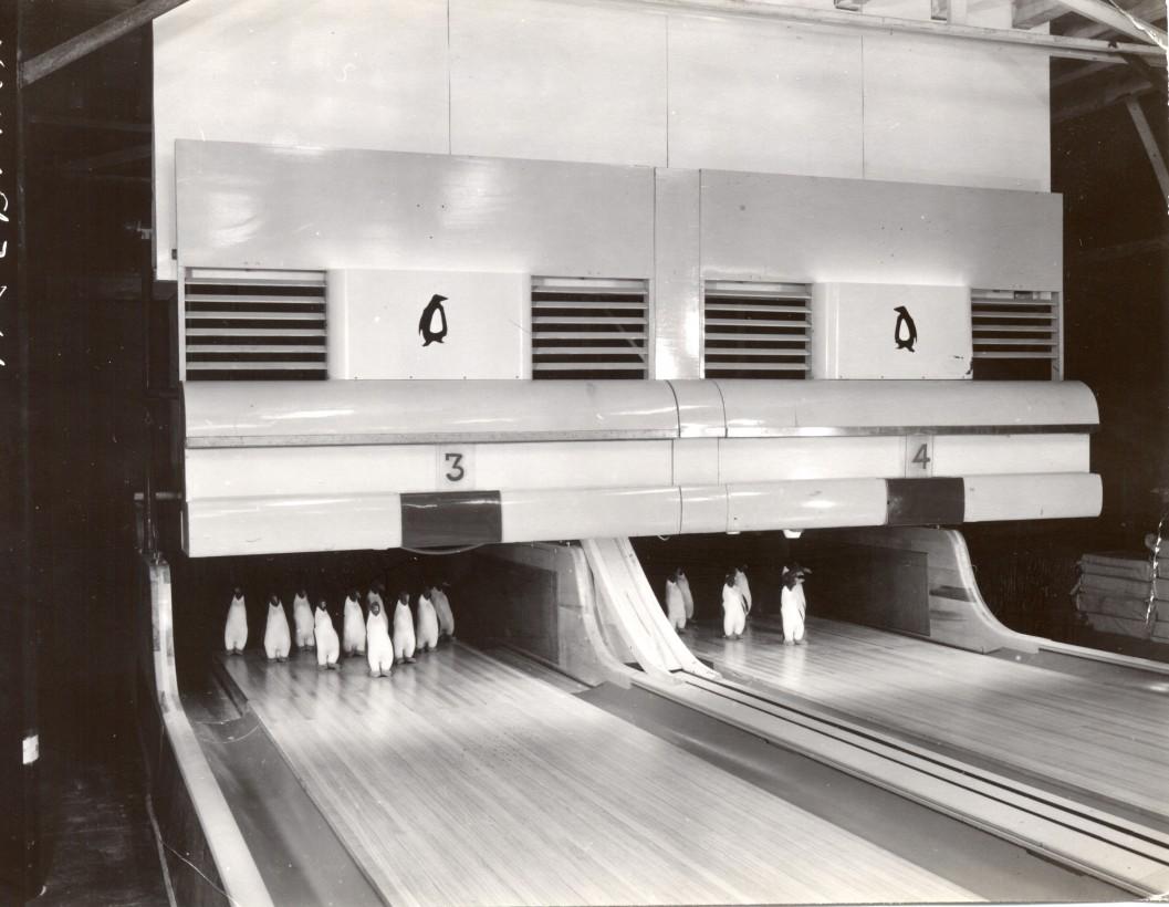 bowling-antartica