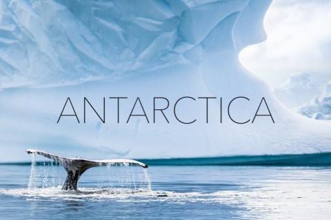 C'est joli l'Antarctique