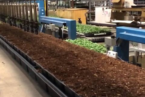 C'est la bonne période pour rempoter vos plantes