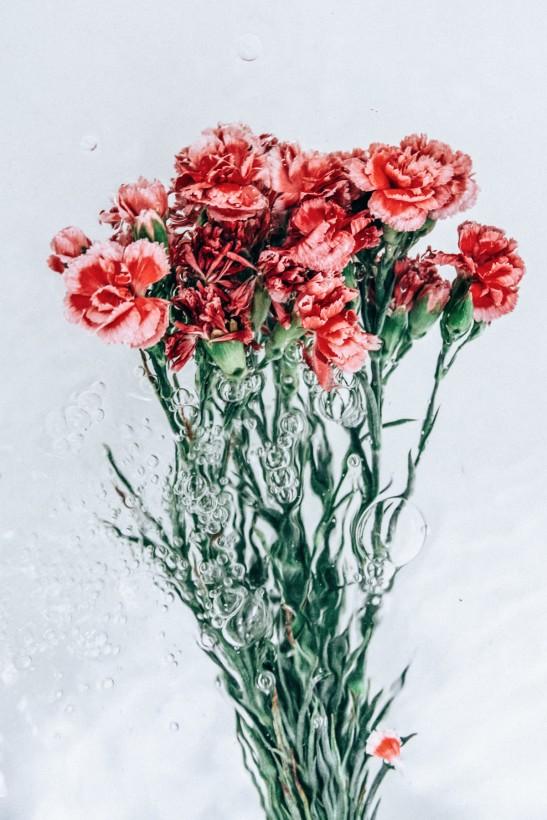 fleur-eau-02