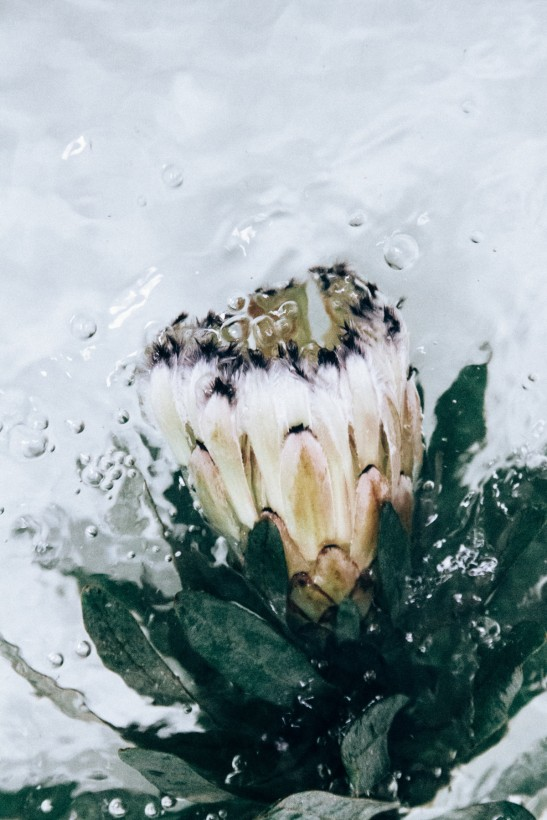 fleur-eau-03