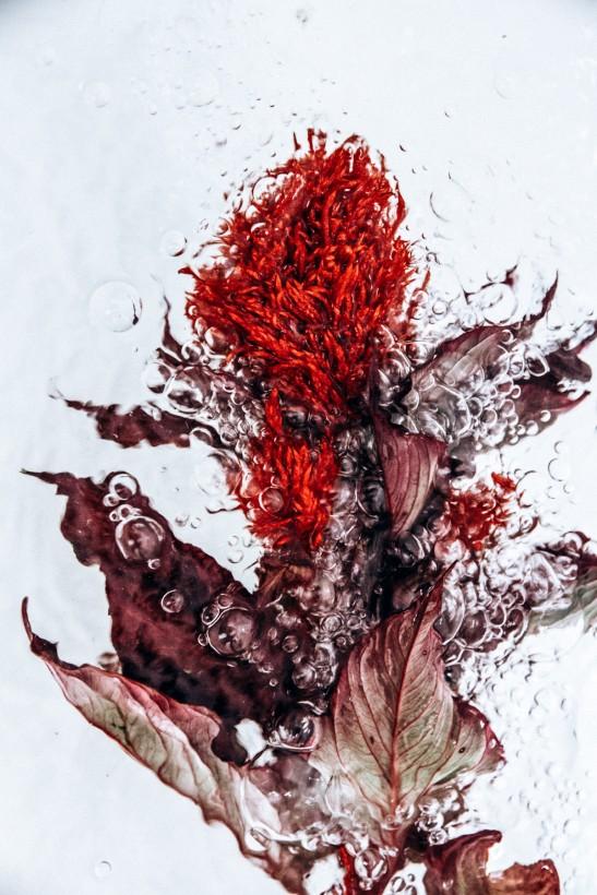 fleur-eau-04