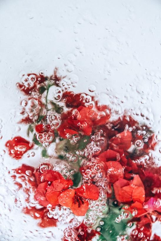 fleur-eau-06