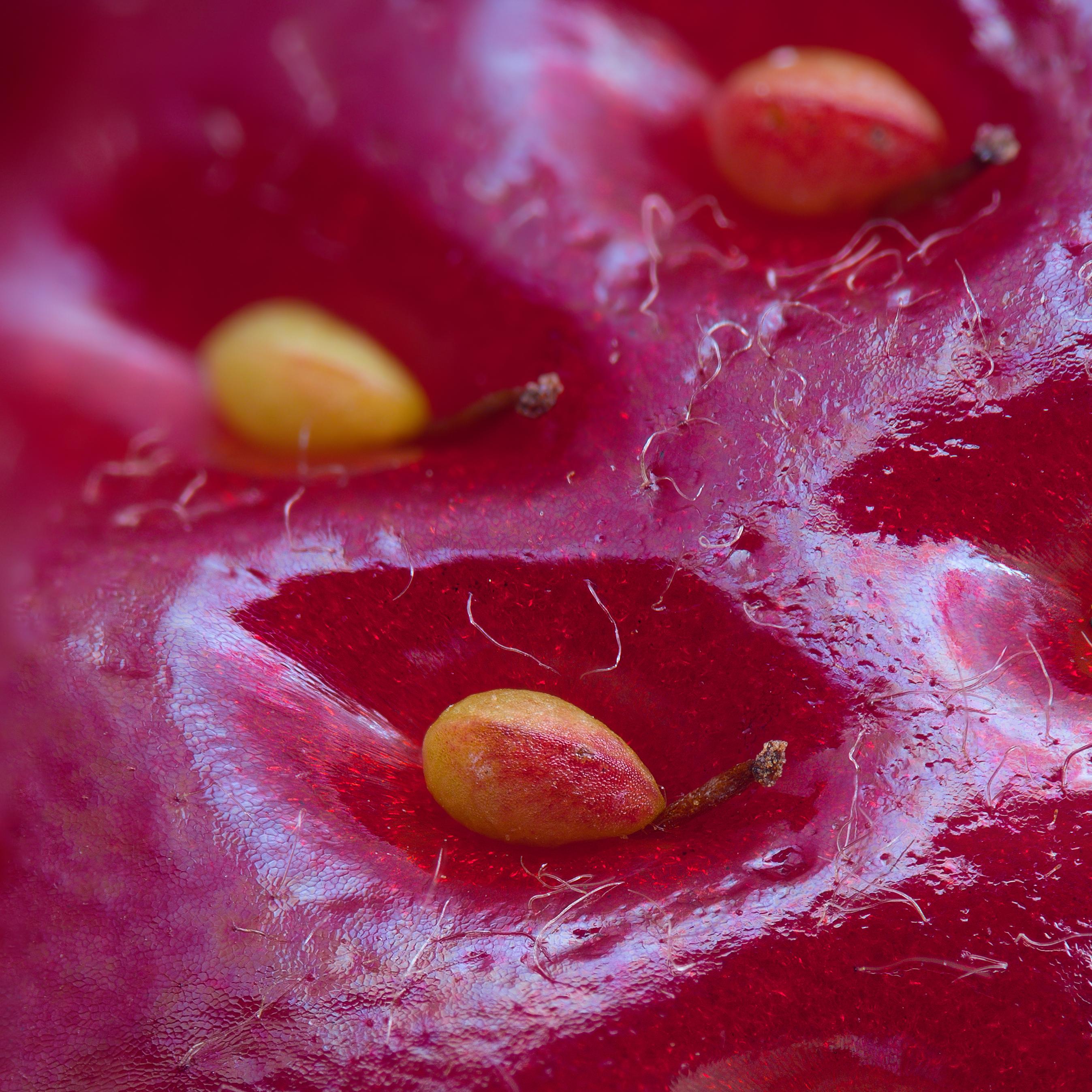 macro-fraise
