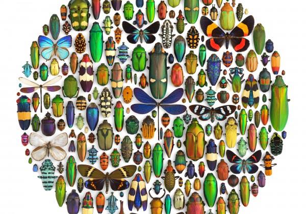 mosaique-insecte-01