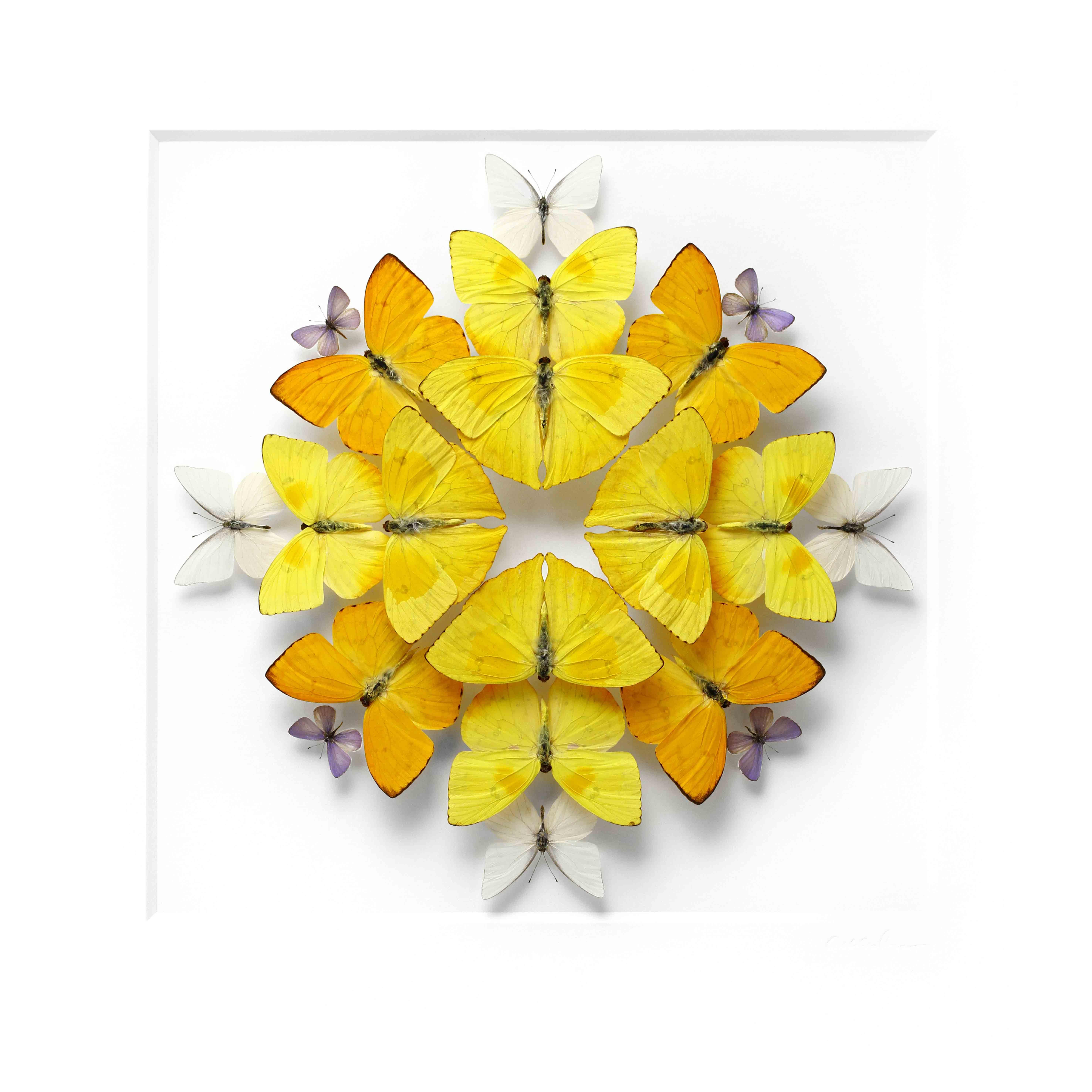 mosaique-insecte-03