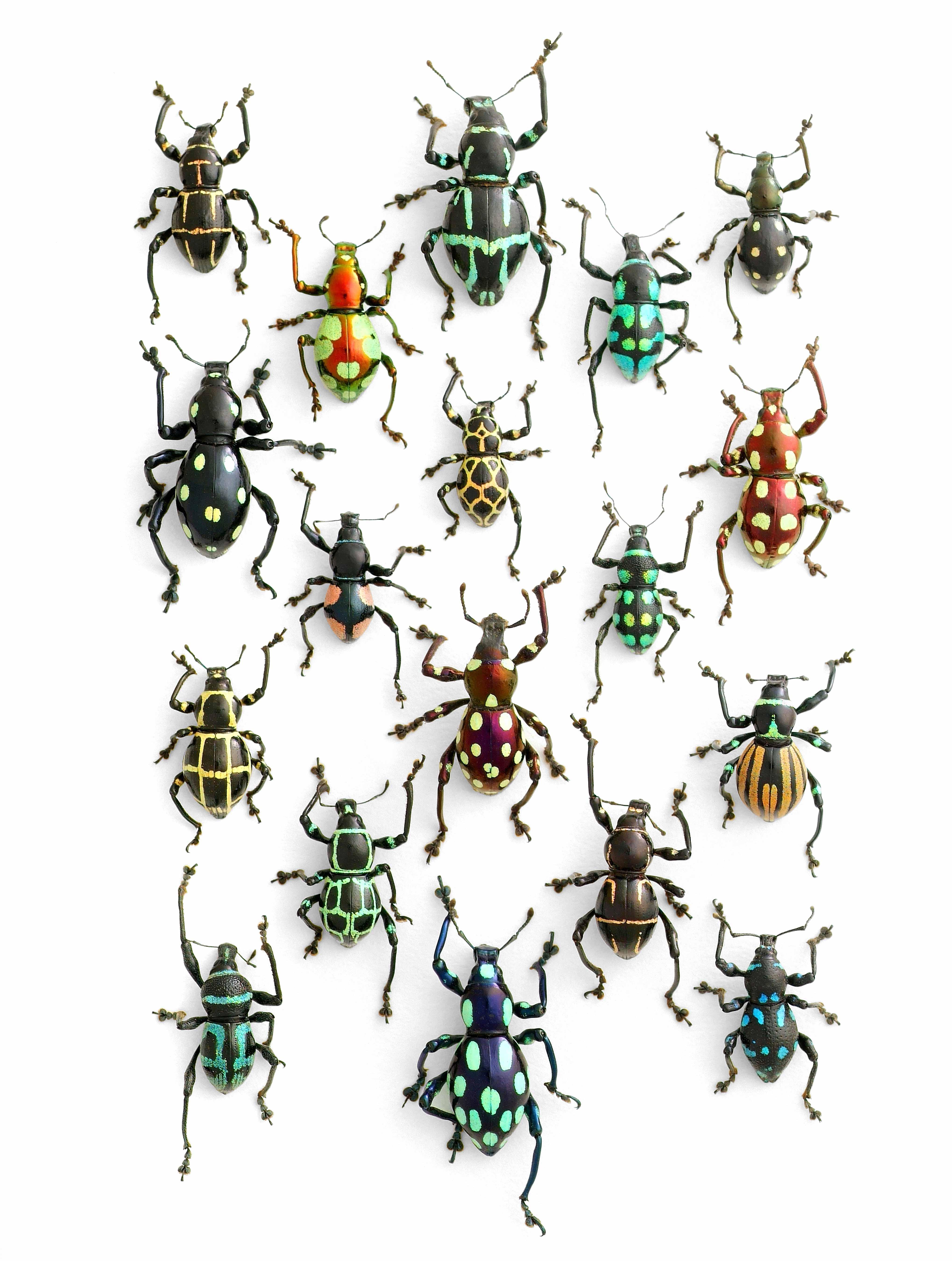 mosaique-insecte-04