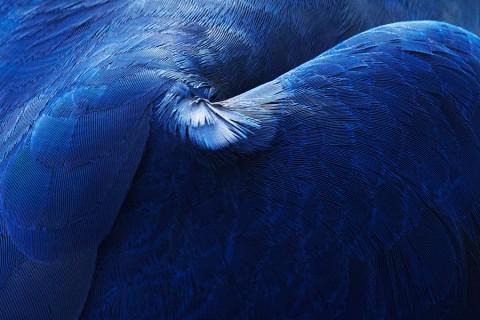 plume-oiseau-abstrait-01