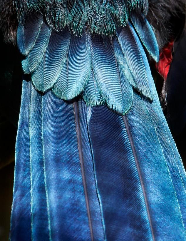 plume-oiseau-abstrait-02