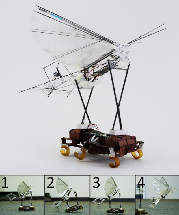 robot-cafard-oiseau