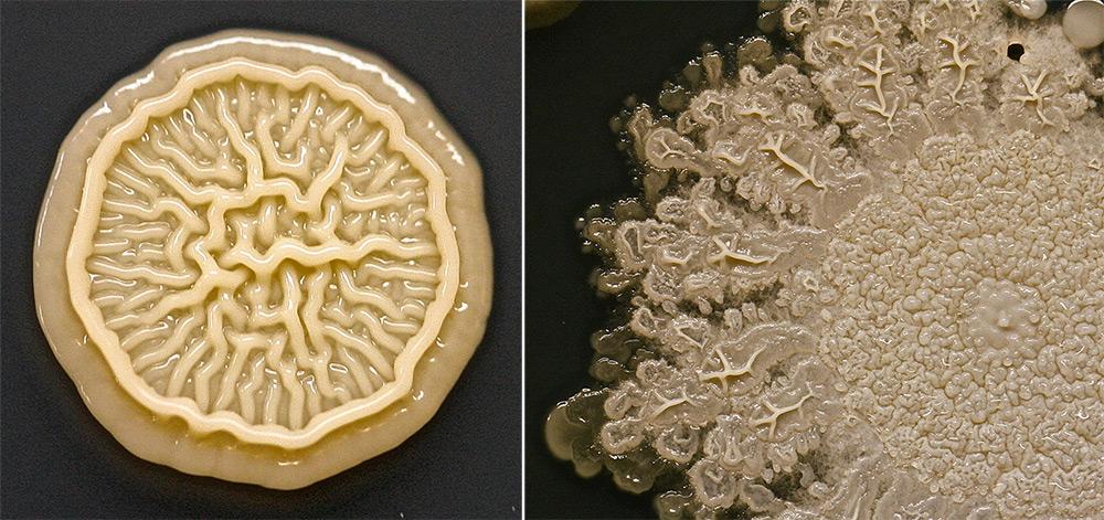 bacterie-main-enfant-02