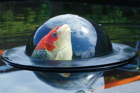 dome-poisson-01