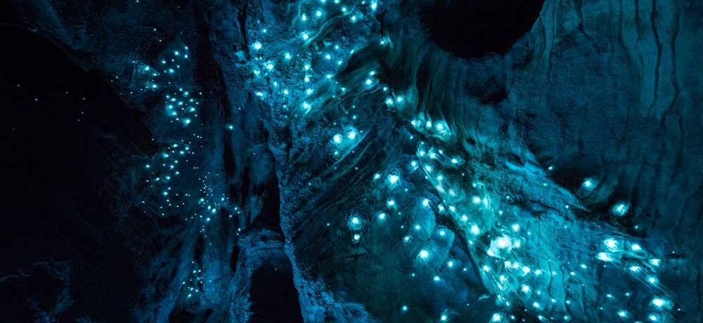 grotte-vers-fluorescent-01