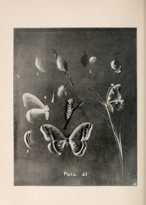 Un guide du dessin sur tableau noir de 1909 for Ecrire sur un tableau noir