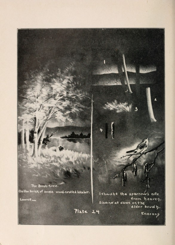 Un guide du dessin sur tableau noir de 1909 - Tableau noir craie ...
