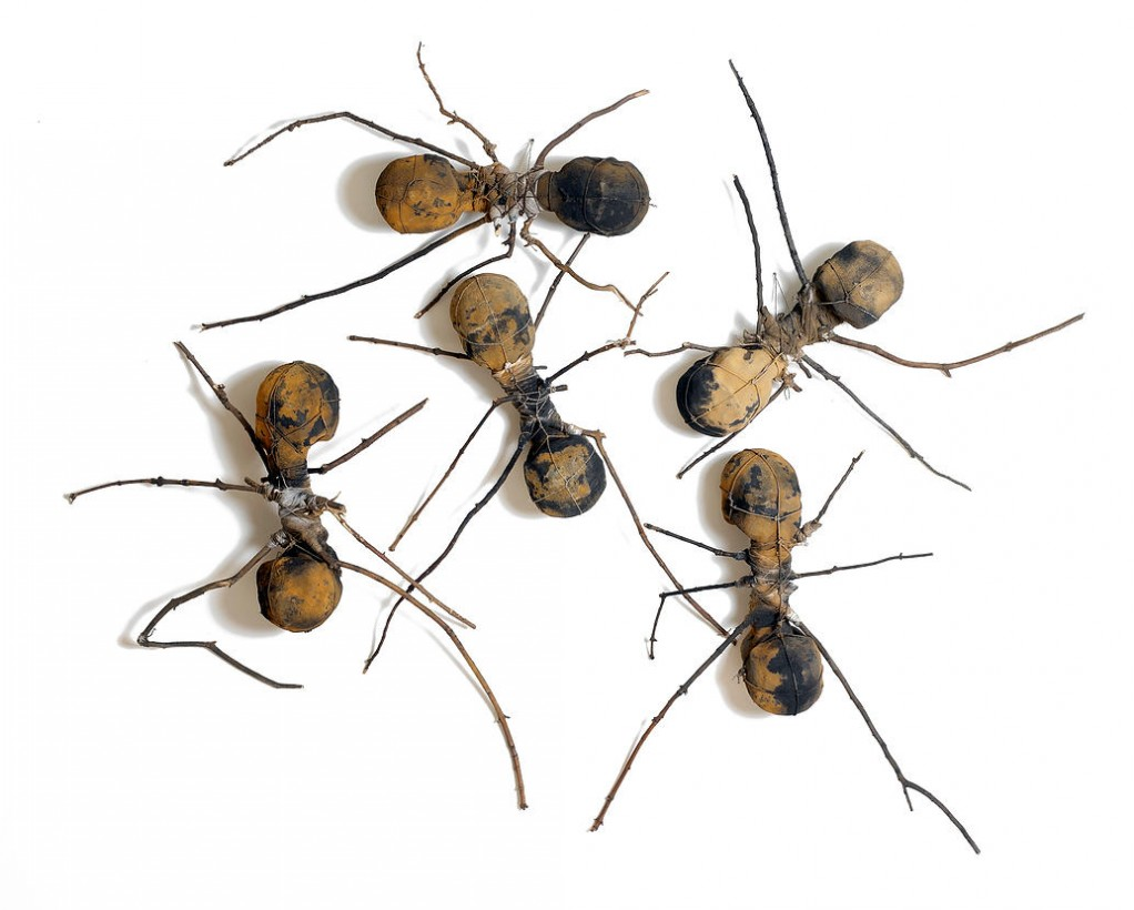 l 39 invasion des fourmis g antes. Black Bedroom Furniture Sets. Home Design Ideas