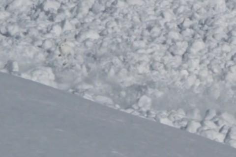 Les lapins flottent sur les avalanches