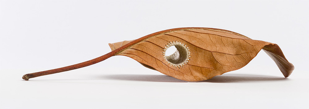 sculpture-feuille-morte-02