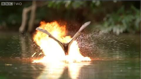 Un documentaire animalier c'est mieux avec des lasers
