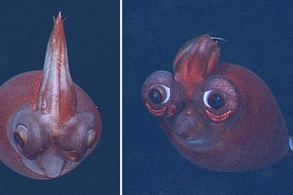 calamar-transparent-houpette-01