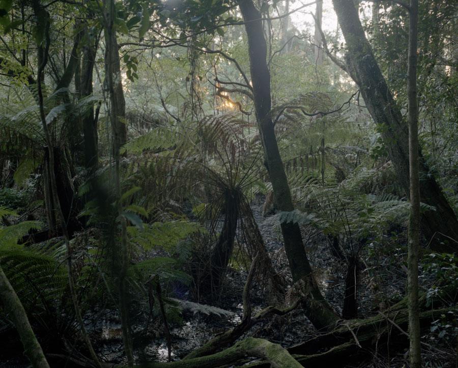 foret-tropicale-australie-01