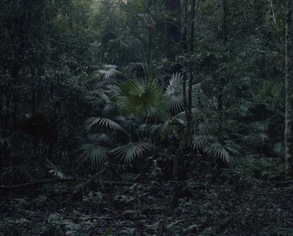foret-tropicale-australie-02