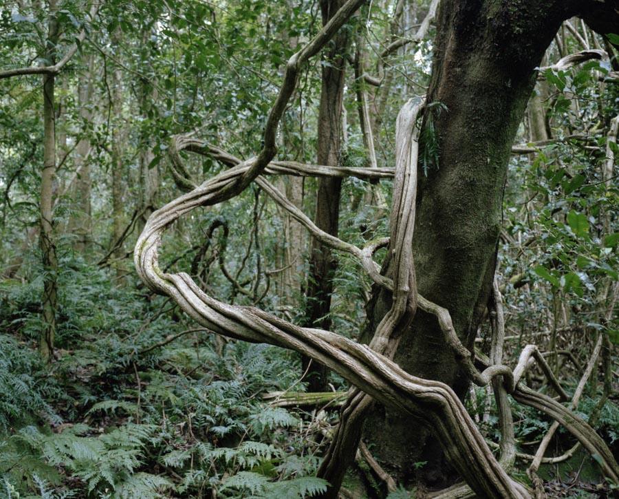 foret-tropicale-australie-03