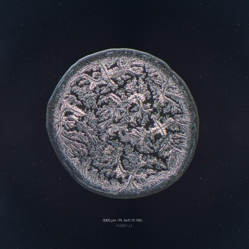 larme-amis-microscope-01