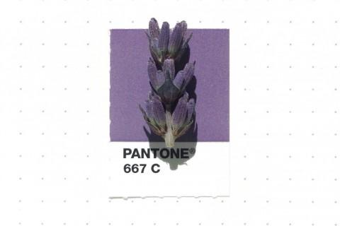 pantone-petit-objet-couleur-01