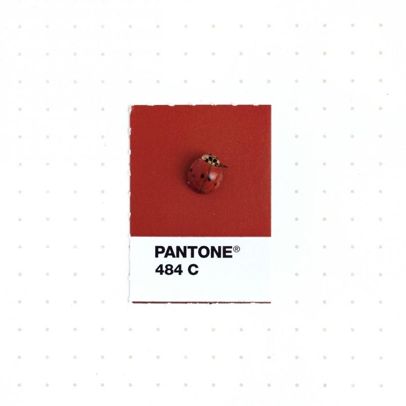 pantone-petit-objet-couleur-02