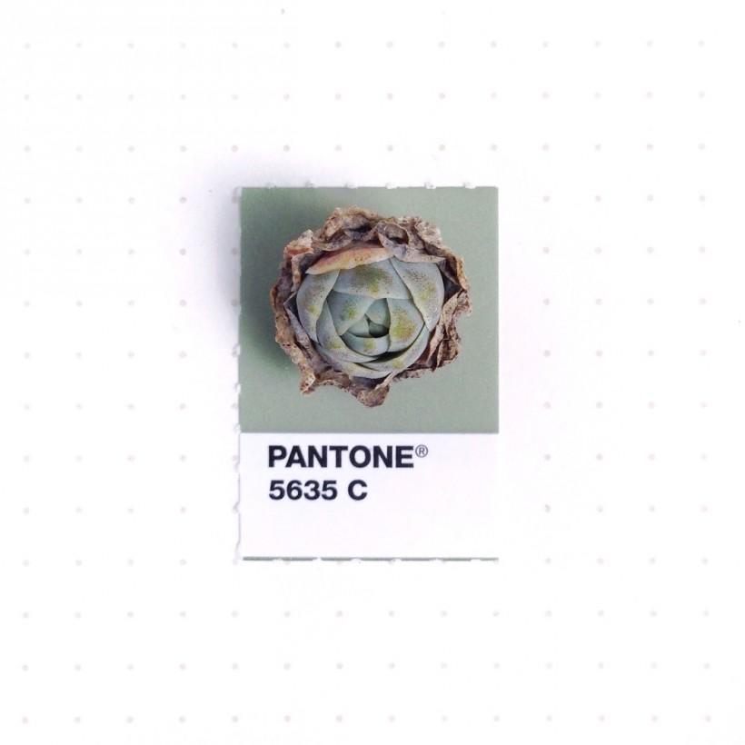 pantone-petit-objet-couleur-06